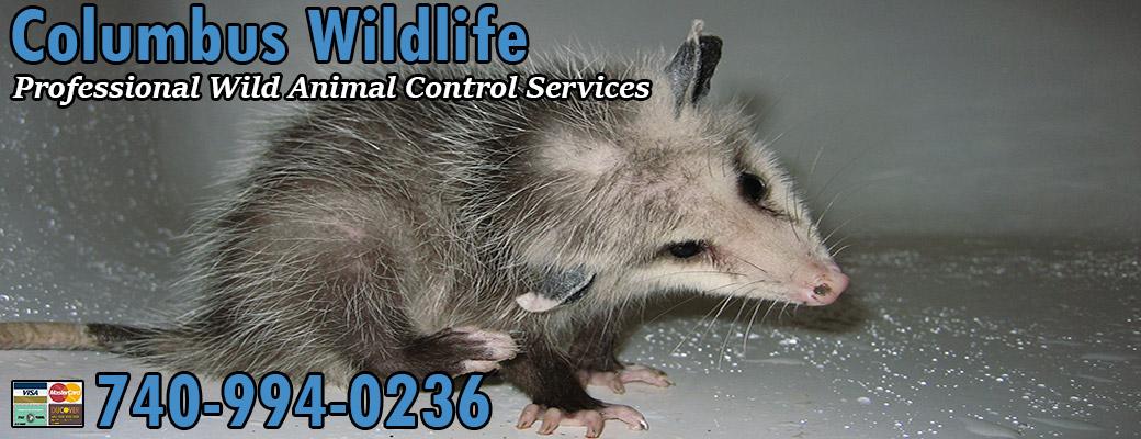 Animal Pest Control Columbus Ohio